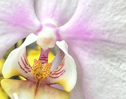 Photographing Orchids At Franklin Park Conservatory