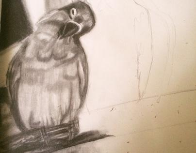 Bird sketch in progress