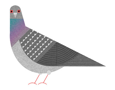 Bird handbook