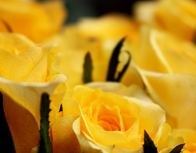Flowers -The beauty of heaven on earth