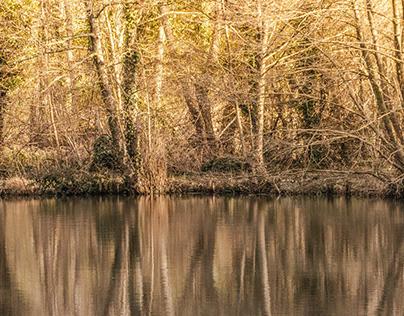 L'étang/The pond