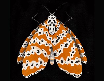 Color Moths.