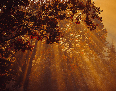 Rays of the morning sun