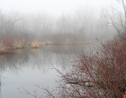 A Foggy Morning in Michigan