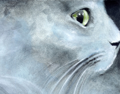 Cat named Smokey