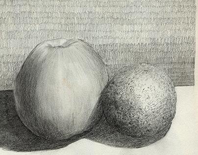 Pencil studies of fruit.
