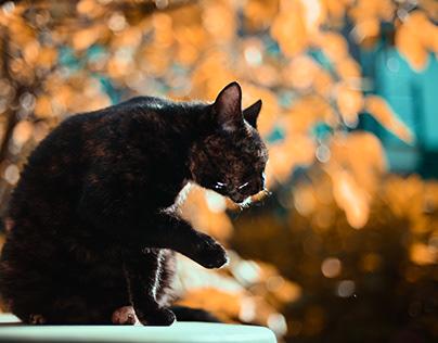 Cat & Autumn Leaves