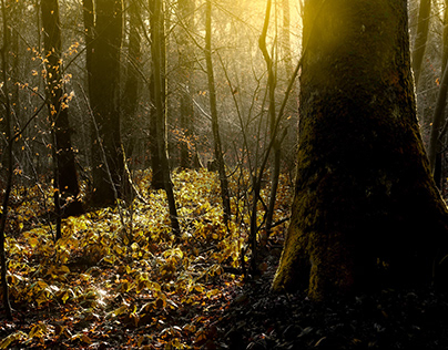 Lost in a golden old forest