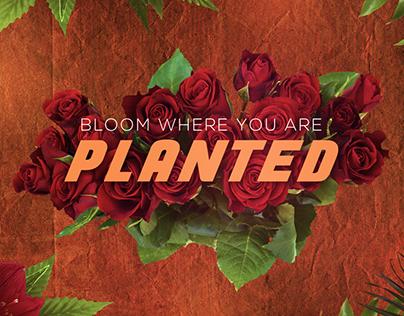 Botanical - Making (Wallpaper)