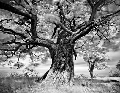 Portraits of Trees