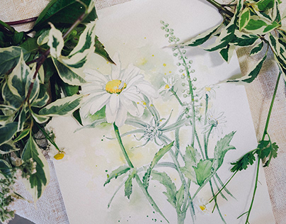 Watercolor daisies. Sketch for a photoproject