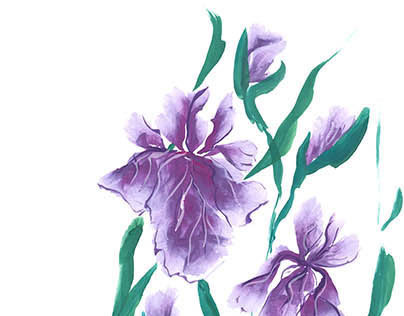 Irises, painted in gouache.