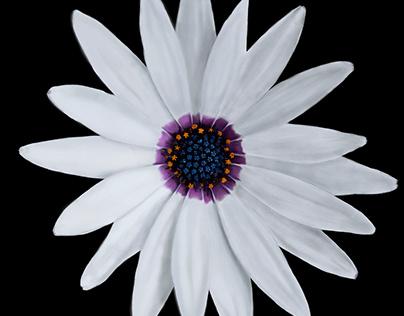 Ilustraciones flores
