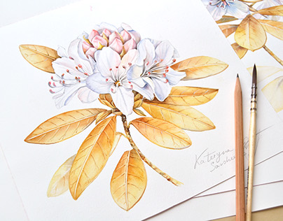 Floral patterns and illustrations for Royal Insignia