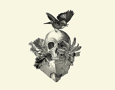 Refractario – Collage