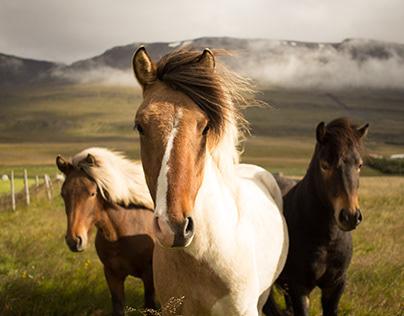 More Common Horse Illnesses