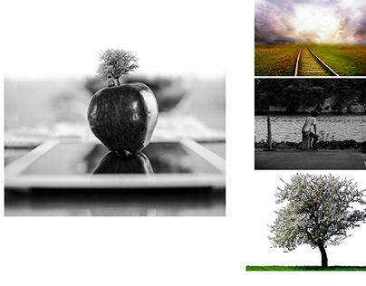 Inside Outside the apple