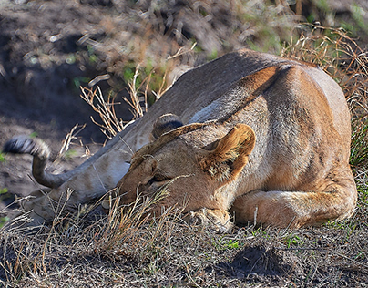 African wildlife in colors