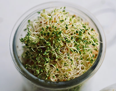 Personal sprouting project