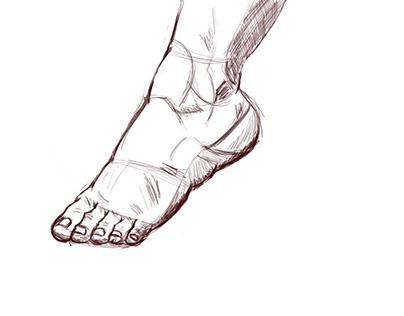anatomy sketching