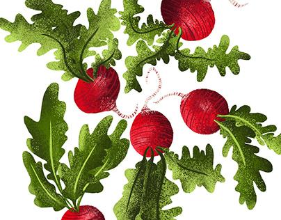 radishes