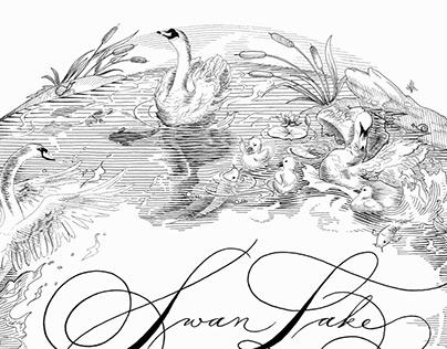Swan Lake Illustration
