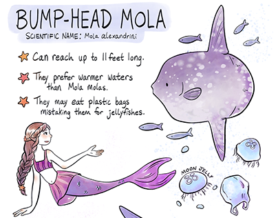 Infographics: Mermaids + Animals