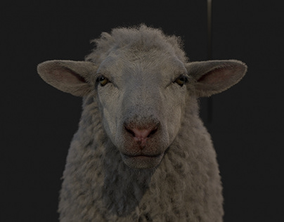 VW - Sheep