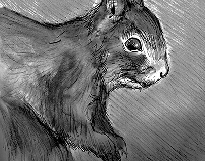 examples: Animal Illustrations 2013-2017