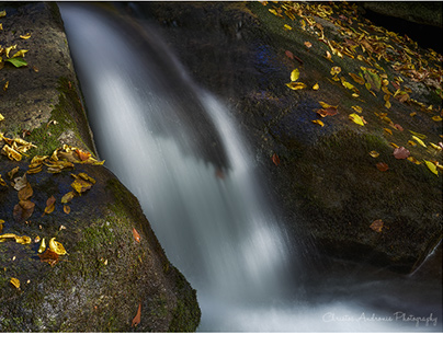 Autumn in the forests of the Rhodope mountains, Greece