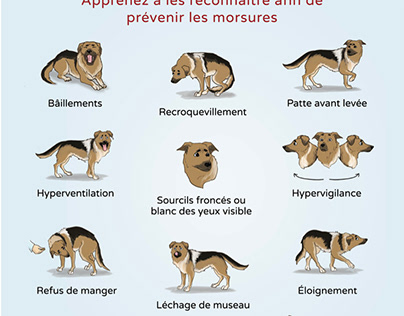 Signs of discomfort in Dogs