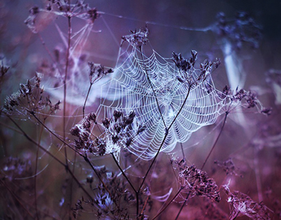 Fairytales of Nature