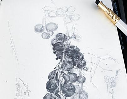 British Flora | Blackberries