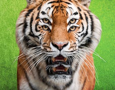 Tiger Energy Drink - OOH