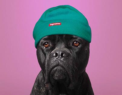 HYPE_DOG_BEAST