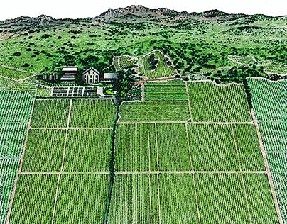 Vineyard Maps / Aerial Art / USA SA / NZ / AUSTRALIA