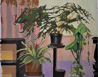 """Pot Plants"""