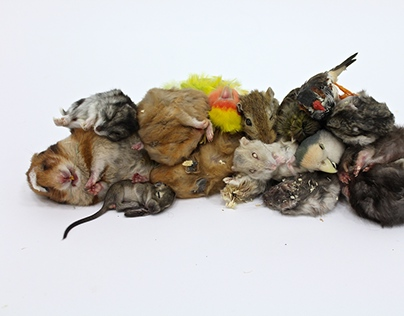 Lifeforms, collected animals