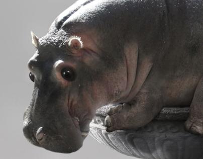 Hippo Photo Manipulation