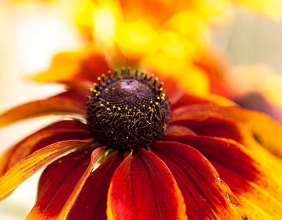 Flowers au naturale