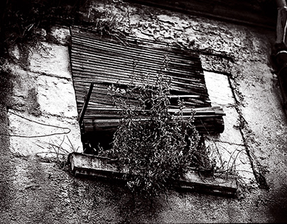 Window - Monochrome