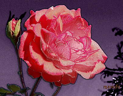 Rose_Project 1