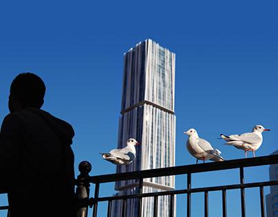 Seagulls or architecture?