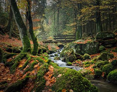 Herbst im Silberbachtal