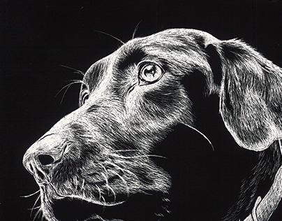 Scratch Board Art - Animal Expression