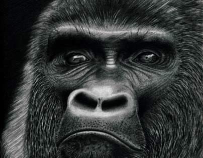 Gorille CHU'A ARTWORK