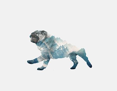 Mountain pug