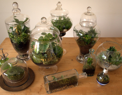 Terrarium Collection