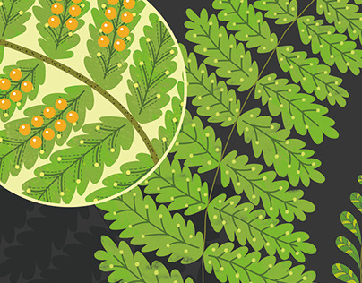 Infographic Design - Plants