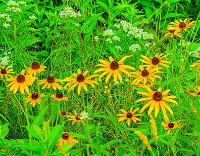 Ringwood Botanical Gardens Photography